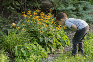 Child smelling flowers, because they look so yellow. Why not?